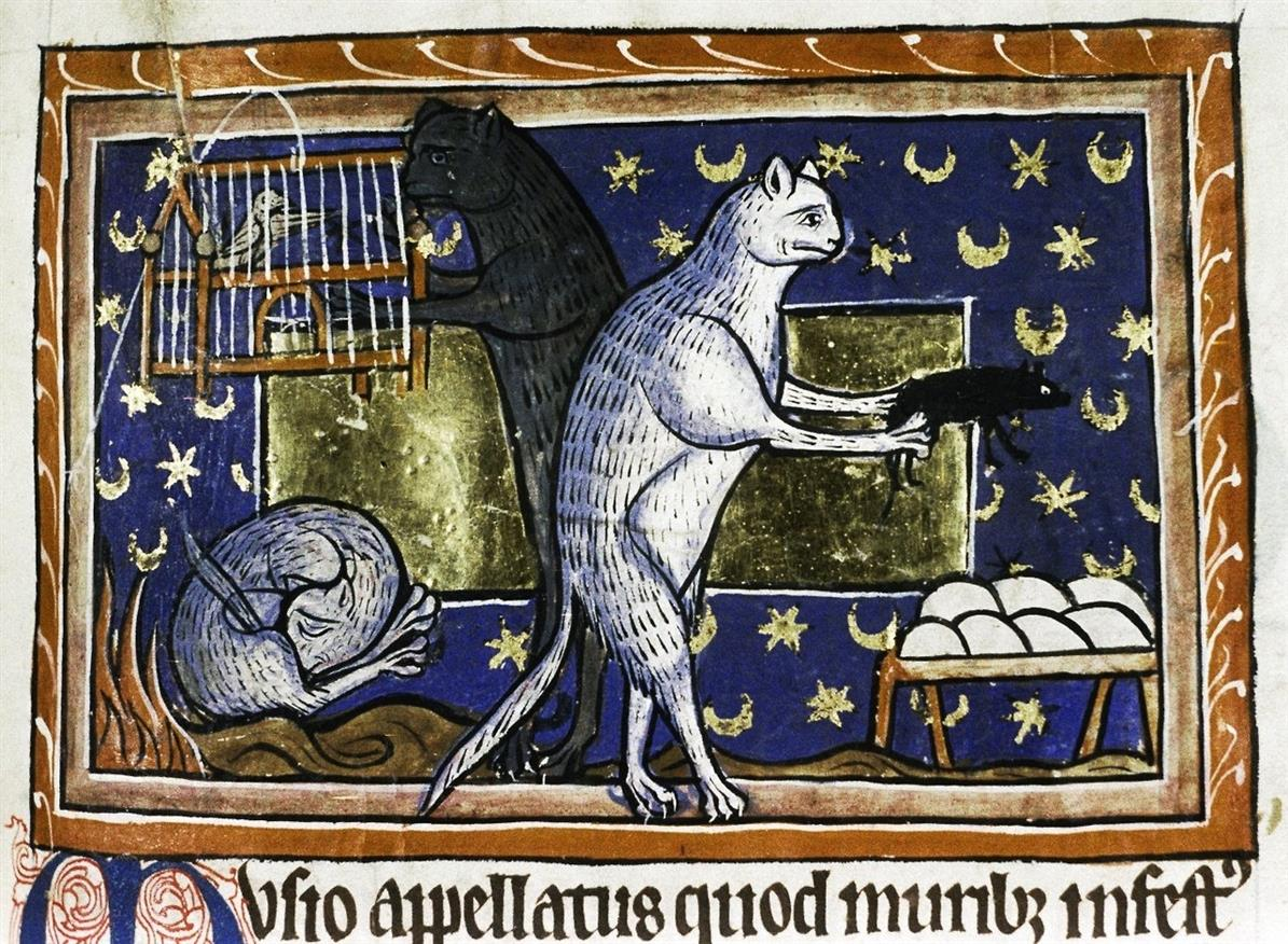Gatti medioevo