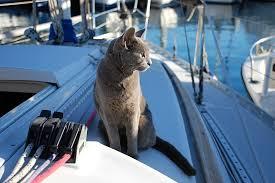 gatto nave2