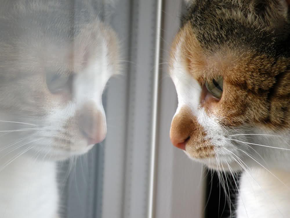 pensieri gatto