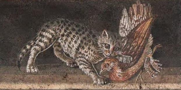 gatto pompei